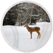 Deer In Road Round Beach Towel
