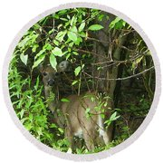 Deer In The Bushes Round Beach Towel