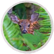 Fawn In The Ferns Round Beach Towel