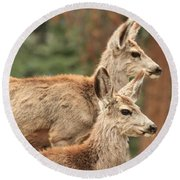 Deer In The Rocky Mountains Round Beach Towel