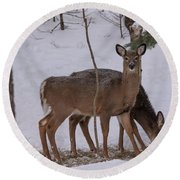 Deer In The Trees Round Beach Towel