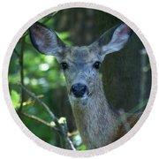 Deer In The Woods Round Beach Towel