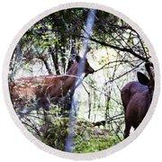 Deer Looking For Food Round Beach Towel