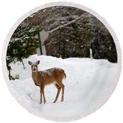 Deer On Side Of Road Round Beach Towel