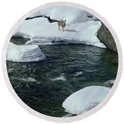 104618-v-deer On The Snow Bank Round Beach Towel