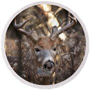 Deer Pictures 449 Round Beach Towel