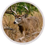 Deer Pictures 525 Round Beach Towel