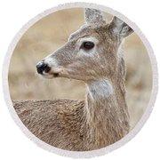 White Tail Deer Profile Round Beach Towel