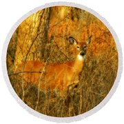 Deer Spotted In A Golden Glowing Field  Round Beach Towel
