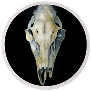 Deer Skull With Aura Round Beach Towel