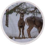 Deer With A Leg Up Round Beach Towel