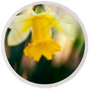 Delicate Daffodil Round Beach Towel
