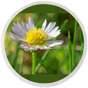Delicate Daisy In The Wild Round Beach Towel
