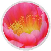 Delicate Pink Cactus Flower Round Beach Towel