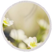 Delicate White Flowers Round Beach Towel