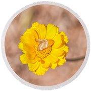 Desert-marigold Moth Round Beach Towel