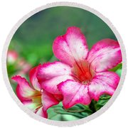 Desert Rose At Kualoa Round Beach Towel