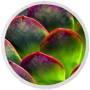 Desert Succulent In Bright Sun And Shade Round Beach Towel