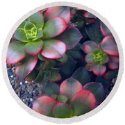 Desert Succulents Round Beach Towel