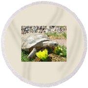 Desert Tortoise Delight Round Beach Towel