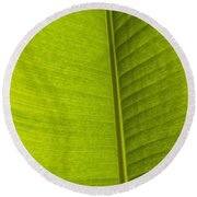 Detail Of Banana Leaf Andromeda Round Beach Towel