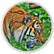Determination In The Tigers Stare Round Beach Towel
