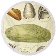 Devonian Fossils, Illustration Round Beach Towel