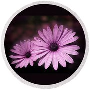 Dew Drops On Daisies Round Beach Towel