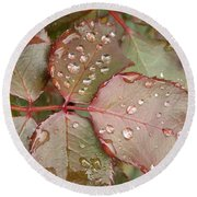 Dew Drops On The Rose Leaves Round Beach Towel