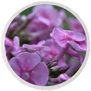 Dew On Phlox Round Beach Towel