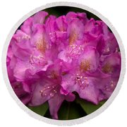 Dewy Rhododendron Round Beach Towel