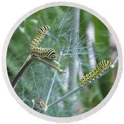 Dillweed And Caterpillars Round Beach Towel