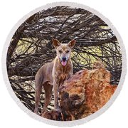 Dingo In The Wild V5 Round Beach Towel