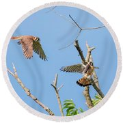 Dinner Time For The Kestrels Round Beach Towel