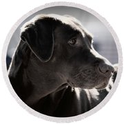 Distracted Dog Round Beach Towel