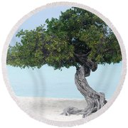 Divi Divi Tree In Aruba Round Beach Towel