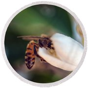 Diving For Pollen Round Beach Towel