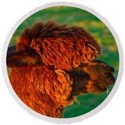 Do You Like My New Haircut Alpaca Round Beach Towel