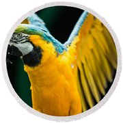 Do Your Exercise Daily Blue And Yellow Macaw Round Beach Towel