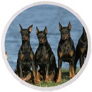 Doberman Pinschers Round Beach Towel