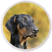 Dobermann Dog, In Autumn Round Beach Towel