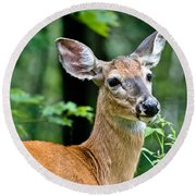 Doe Close Round Beach Towel