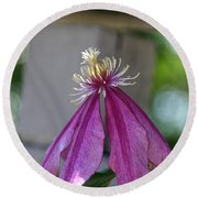 Dog Eared Clematis Round Beach Towel