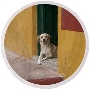 Dog In Colorful Mexican City Round Beach Towel