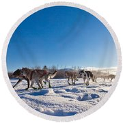Dog Team Pulling Sled Round Beach Towel