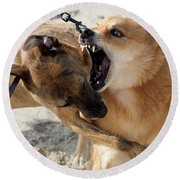 Dogs Fight On The Beach In Emerald Round Beach Towel