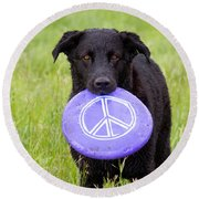 Dogs For Peace Round Beach Towel