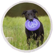 Dogs For Peace Too Round Beach Towel