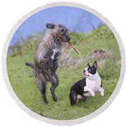 Dogs Playing With Stick Round Beach Towel