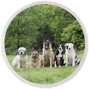 Dogs, Various Breeds In A Line Round Beach Towel